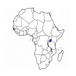 Länder und Regionen